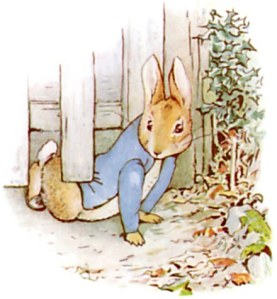 peterrabbit7